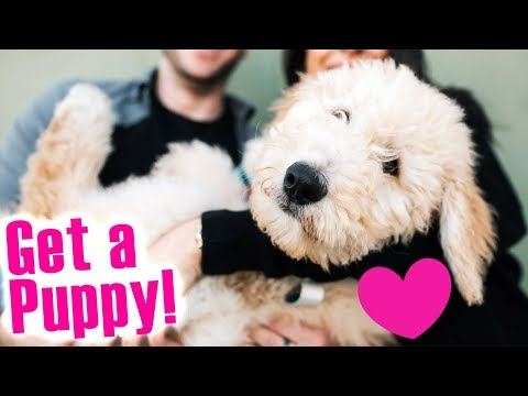 HOW TO: Get A Puppy! With EASY Parent-Proof Steps! (Part 3)
