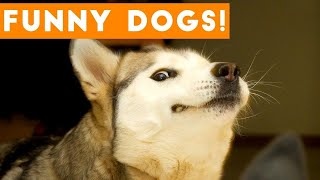 As funny dogs play under music Сool video Top videos