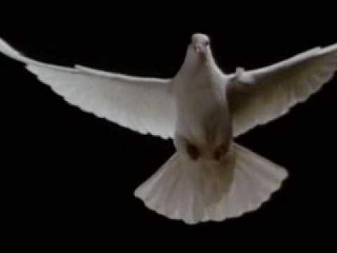 Pigeon Flight