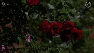 Fem que floreixi!