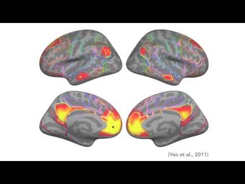 Neuroscience of Meditation | Dustin DiPerna & Sean Dae Houlihan | @ Consciousness Hacking SF
