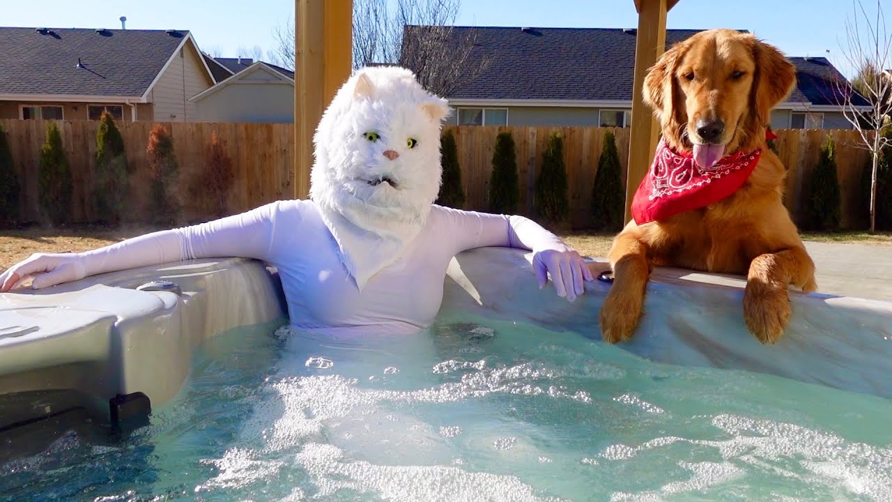 Cat & Dog Morning Routine in Hot Pool!