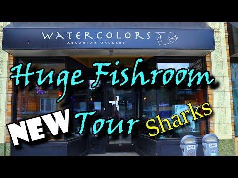 Watercolors Aquarium Gallery Grand Rapids Michigan