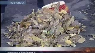 Палити не можна! Опале листя вивезуть комунальники