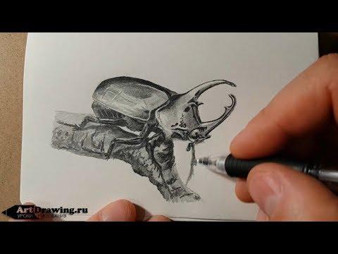 Рисуем карандашом жука