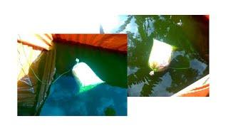 Persiapan awal Air Kolam Ikan Lele Sebelum Tebar Benih pada kolam Terpal / Semen