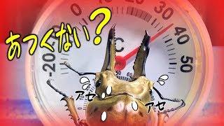 カブトムシ+クワガタ=ブリード 死着はいやだ!真夏の発送方法について検証してみた(くろねこチャンネル)