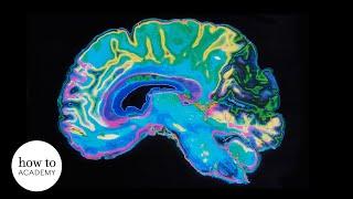 Demolishing the Myth of the Female Brain