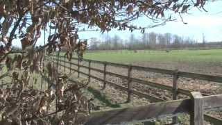 Les prairies pour chevaux Conseils vétérinaires