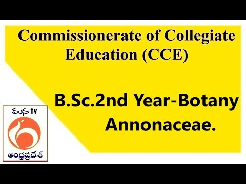 Commissionerate of Collegiate Education (CCE )   B.Sc.2nd Year   Botany   Annonaceae    MANATV Live