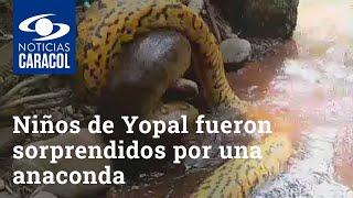 Niños que jugaban en caño de Yopal fueron sorprendidos por una anaconda