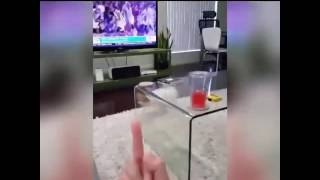 Реакция собаки на средний палец