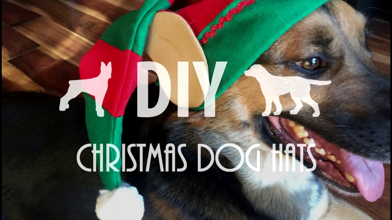 Christmas Hats For Dogs.Diy Santa Hats For Dogs Baja Dog Vlog 17