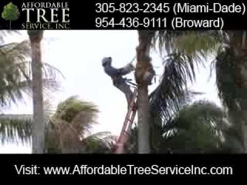 Trim A Palm Tree T