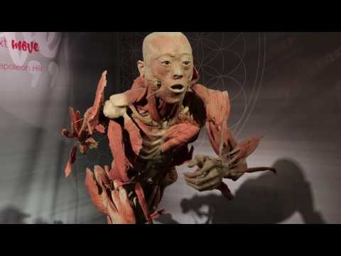 Real Bodies Museum Exhibit Review - Warning! Real Preserved Human Specimens in video!