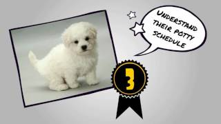 How to Potty Train a Bichon Frise | House Train a Bichon Frise FAST
