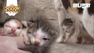 """""""내가 아픈건 괜찮지만 내 새끼 좀 살려주세요"""" 고양이 모자의 위험한 동행의 결말은..? 이전 이야기↓↓↓ https://youtu.be/ACnEl2CjKQo #동물농장..."""