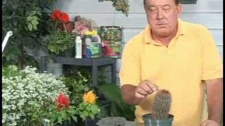 Gardening Plant Care : Cactus Plant Care