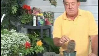gardening plant care cactus plant care