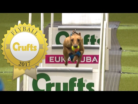 Is This The Fastest Flyball Dog at Crufts Ever?