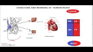 Structure and working of human heart #khanacademytalentsearch