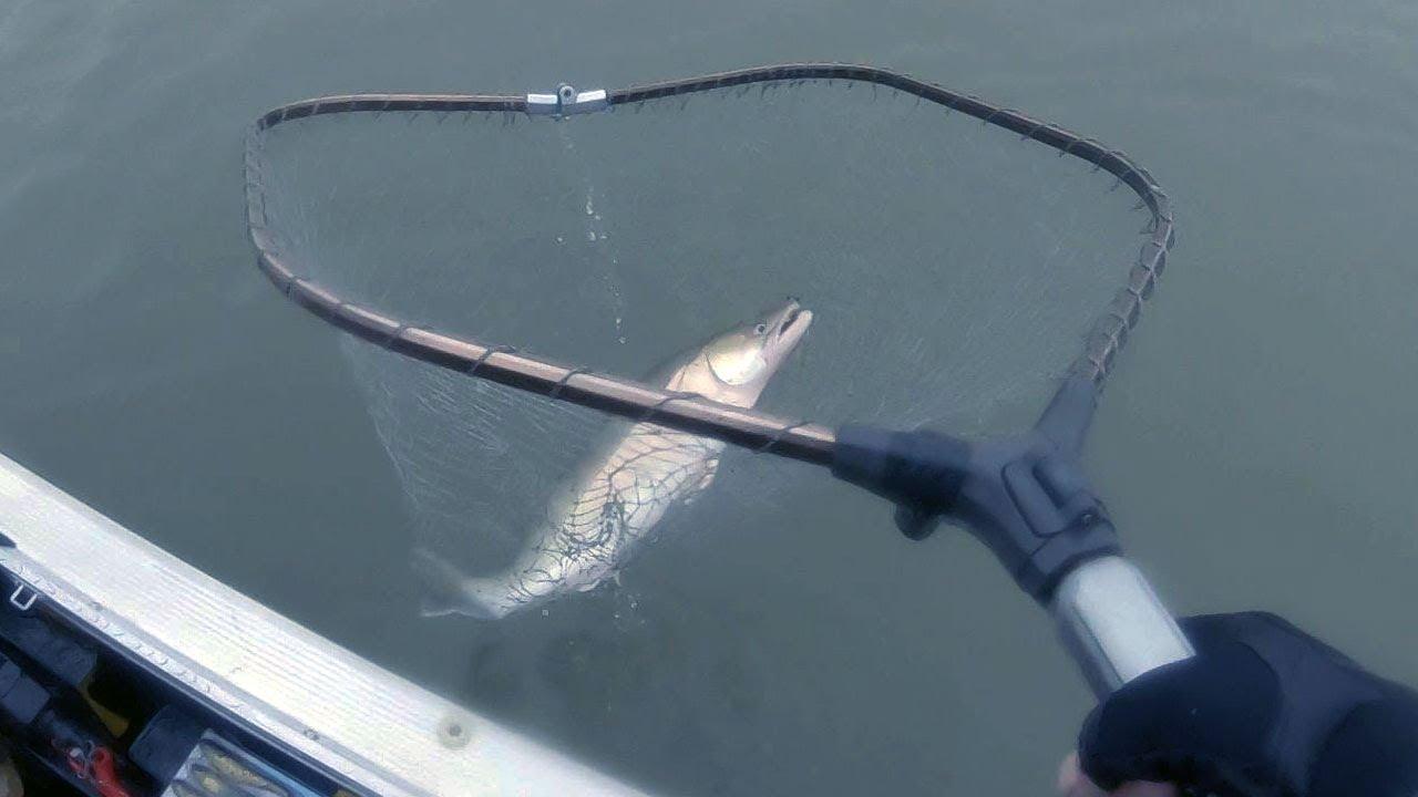 Тук тук БАХ!!! Удачная рыбалка на хищника по холодной воде. Река Обь