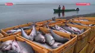 """Правила """"красной"""" рыбалки"""