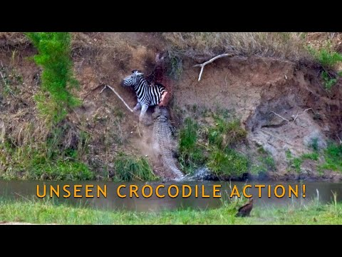 Unseen Crocodile Dives! Nile Crocodile Plunges 10+ Meters Into The Sabie River With Zebra Kill...