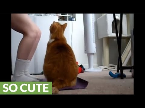 Cat loves to do yoga with owner