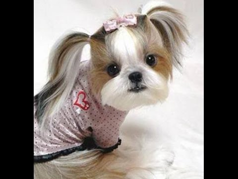 kumpulan gambar anjing paling lucu