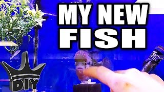 I HAD TO GET THIS FISH!!!