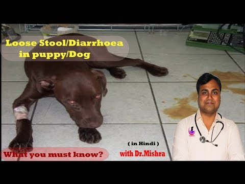 Why Dog Have Diarrhea?