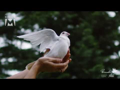 White Dove Filmed With 2000fps Ultra Slow Motion In Cluj