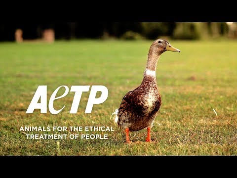 Die Wahrheit über Menschenstopfleber / Animals for the Ethical Treatment of People
