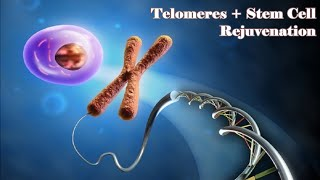 Regenerate your Telomeres and Stay Young Forever - Gentle Rain Sounds