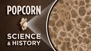 Popcorn Under A Microscope | NPR's Skunk Bear