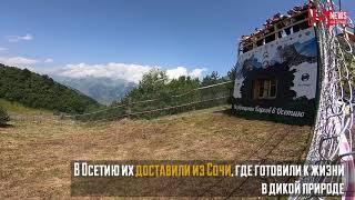 В Северной Осетии выпустили двух переднеазиатских леопардов.