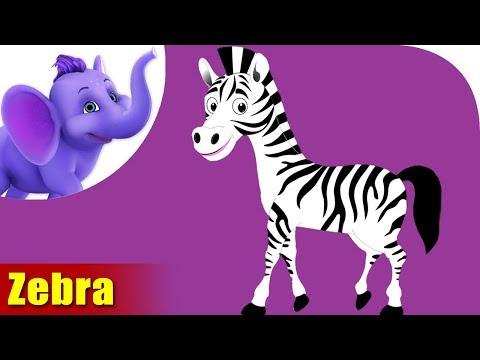 Zebra Rhymes, Zebra Animal Rhymes Videos for Children