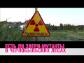 Есть ли звери мутанты в чернобыльских лесах