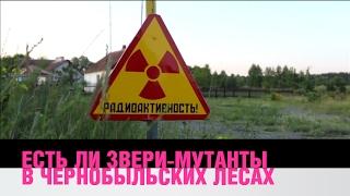 Есть ли звери-мутанты в чернобыльских лесах?