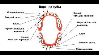 видео У малыша режутся зубки – как облегчить его состояние?