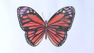 Уроки рисования. Как нарисовать бабочку(Как нарисовать бабочку ▻ Скачайте видео урок