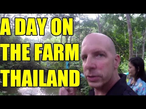 A DAY ON THE FARM V 296