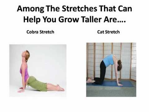 Growing Taller Exercises - Exercises To Lengthen Your ...