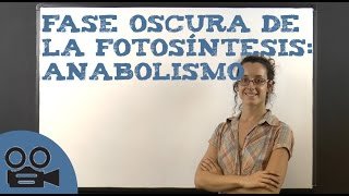 Fase oscura de la fotosíntesis: anabolismo