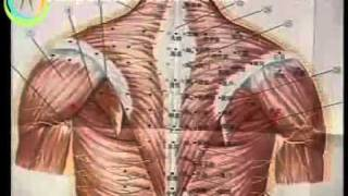 Acupuncture Video Course Lesson 18  -  Points - Continued