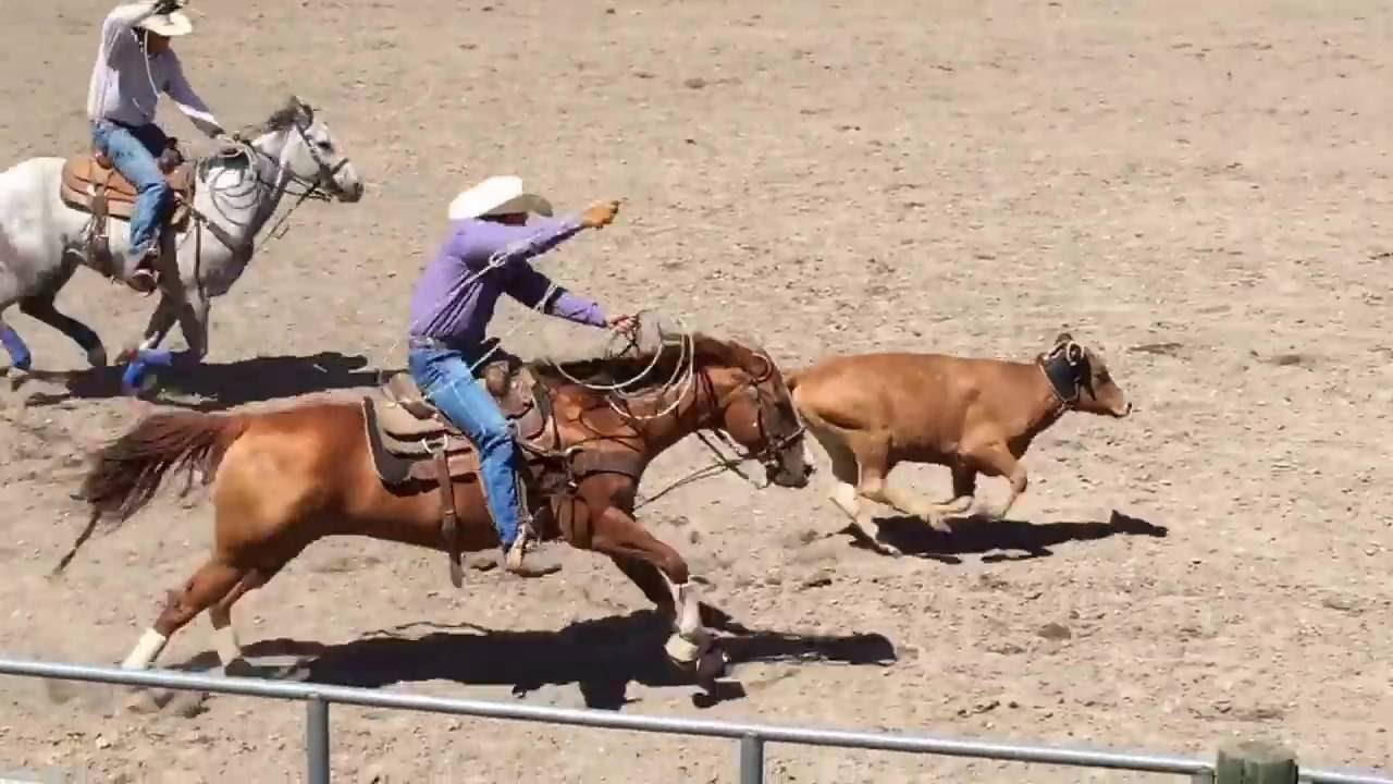 rodeo events team roping