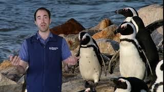 Fast Ocean Facts — Penguins Projectile Defecate!