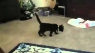 Кошачьи испуги