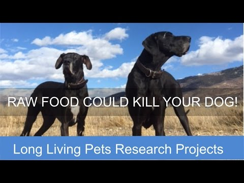 A Raw Food Diet Could Kill Your Dog - Truth or a Myth?